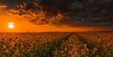 a light bright and beautiful wallpaper flower warwickshire goldenhour footpath