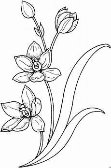 gratis malvorlagen blumen pflanze mit stengel ausmalbild malvorlage blumen