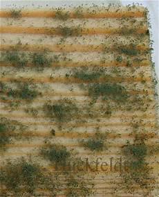 Gro 223 Fl 228 Chiger Schimmelbewuchs An Holz Serpula