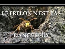 comment trouver un nid de frelon le frelon europ 233 en n est pas dangereux n en ayez pas peur
