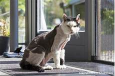 pourquoi mon chat perd ses poils actuanimaux