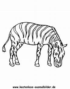 Bilder Zum Ausmalen Zebra Ausmalbild Zebra 4 Zum Ausdrucken