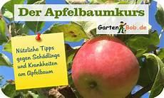sch 228 dlinge und krankheiten am apfelbaum gartenbob elopage