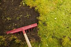 enlever mousse gazon rateau get rid of moss in your lawn with these tips the