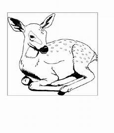 zoo 00390 gratis malvorlage in tiere zoo ausmalen
