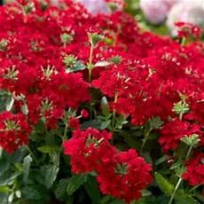 southern living plant collection 2 5 qt endurascape