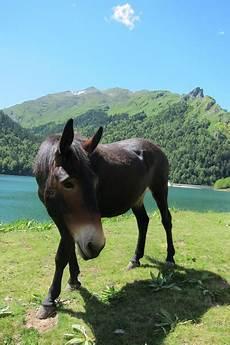 ffe trouver un cheval la cabaline les chevaux du lac la cavalerie