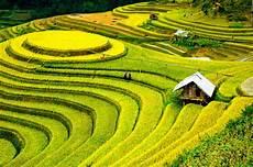 terrace farming pics