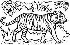 Cara Mewarnai Harimau Belajarmewarnai Info