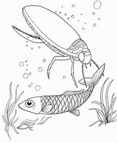 Insekten Malvorlagen Tiere Insekt Und Fisch Im Wasser Ausmalbild Malvorlage Tiere