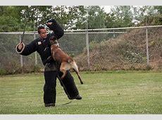 trainen   Politiehonden lodewijk.jouwweb.nl