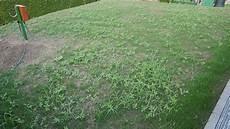 Ist Das Ein Unkraut Oder Nicht Pflanzen Garten Gras