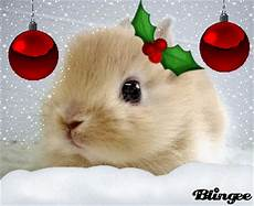 christmas bunny picture 103563345 blingee com