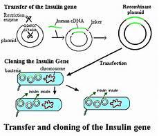 alimentazione post transfer allele