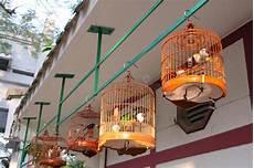 gabbia uccello gabbia di uccello cinese fotografia stock immagine di