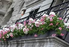 fiori per terrazzi al sole fiori e piante per balconi e terrazzi a fiorilandia