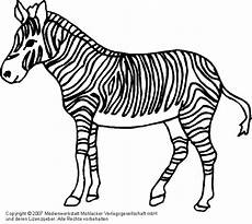 Bilder Zum Ausmalen Zebra Zebra 1 Medienwerkstatt Wissen 169 2006 2017 Medienwerkstatt