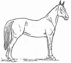Malvorlage Pferd Umriss Stehendes Pferd Malvorlage Als Kostenloses Ausmalbild