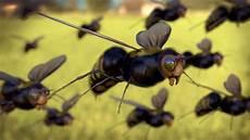 insekt an fauligem obst foto gratis api macro insetto insetto artropode