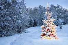 tree winter nature background wallpapers on