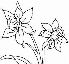 orquidea de venezuela para colorear turpial y orquidea par dibujar imagui