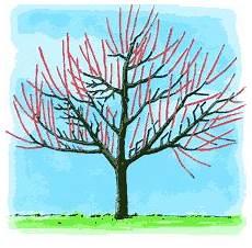 Baumschnitt F 252 R Sch 246 Ne Und Gesunde B 228 Ume Im Garten