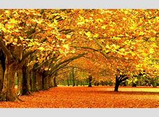 Fall Colors Wallpaper Backgrounds   Wallpaper Cave