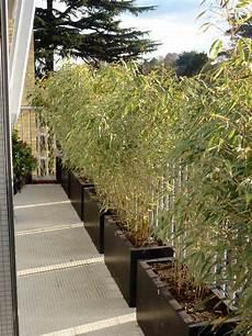 Une Haie De Bambou Landscaping Bambous Jardin Bambou