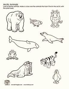 arctic animals worksheets for preschool 14127 arctic animals worksheet for 2nd 3rd grade lesson planet