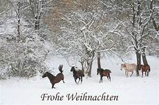 frohe weihnachten foto bild tiere haustiere pferde