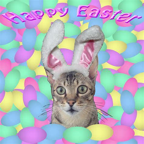 Happy Easter Cat