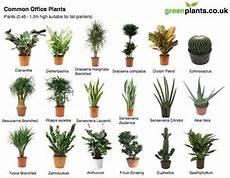 41 best office plants images on pinterest gardening indoor house plants and office plants