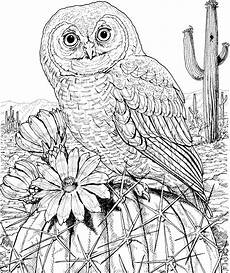 Gratis Malvorlagen Eulen 10 Difficult Owl Coloring Page For Adults