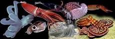 Pengertian Ciri Dan Klasifikasi Mollusca Ilmu Pengetahuan