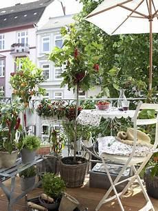 kräuter und gemüse auf dem balkon gem 252 se und kr 228 uter auf dem balkon balkon inspirationen
