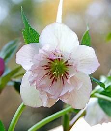 fiori a casa in edicola dal 23 gennaio casa in fiore di febbraio cose