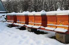 was machen bienen im winter bienen honigtropfen