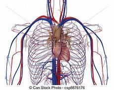 warum sind adern blau arteries and veins clipart panda free clipart