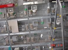 batteria di gabbie usate vendo gabbie borgovit