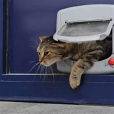 installer une chatière installer une chati 232 re sur porte