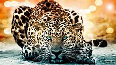 jaguar full documentary the year of the cat history