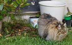 katzen vertreiben diese mittel helfen gegen fremde katzen