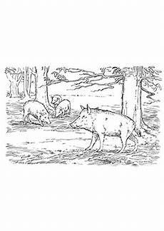 ausmalbild schweine im wald kostenlos ausdrucken