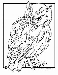 realistic owl coloring page woo jr kids activities