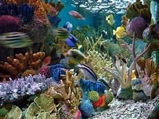 Pemandangan Eksotik Dalam Akuarium Air Laut Akuarium