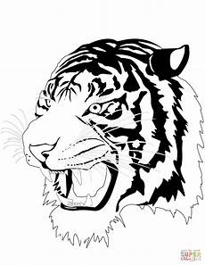 tiger coloring pages free download clipartmag