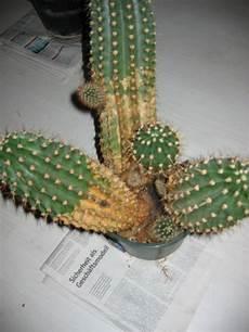 bitte hilfe bei kaktus pflege haus garten forum