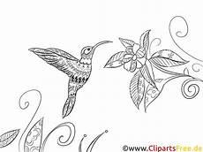 ausmalbild f 252 r erwachsene vogel fauna