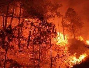 Image result for Small fire forest fire
