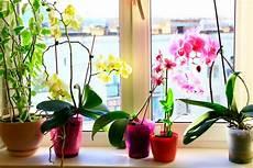 comment arroser une orchid 233 e tout ce que vous devez